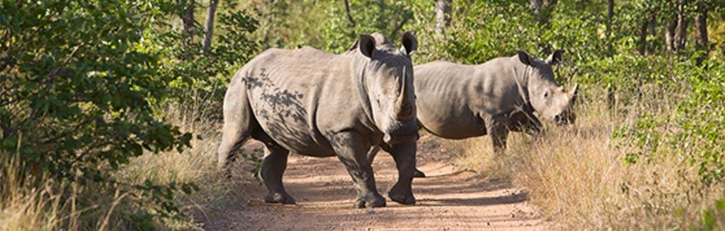 Rhino panoramic image